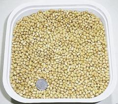 備中白小豆