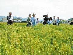 ㈲名田島農産