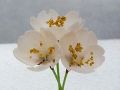 桜の花(工芸菓子)