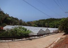 台風からカカオ樹を守る堅牢なハウス