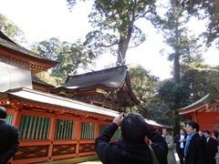 鹿島神宮本殿とご神木