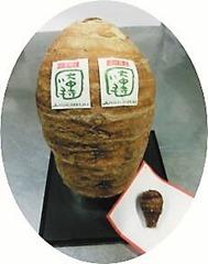 話題の大きな大中寺芋と里芋